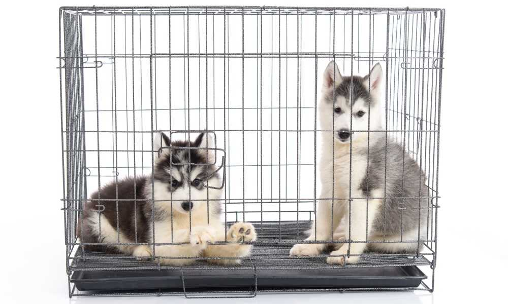 How Long Can I Keep My Dog in a Crate?