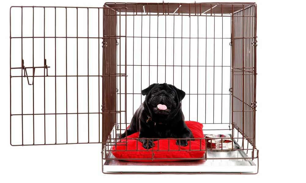How to Disinfect a Dog Crate?