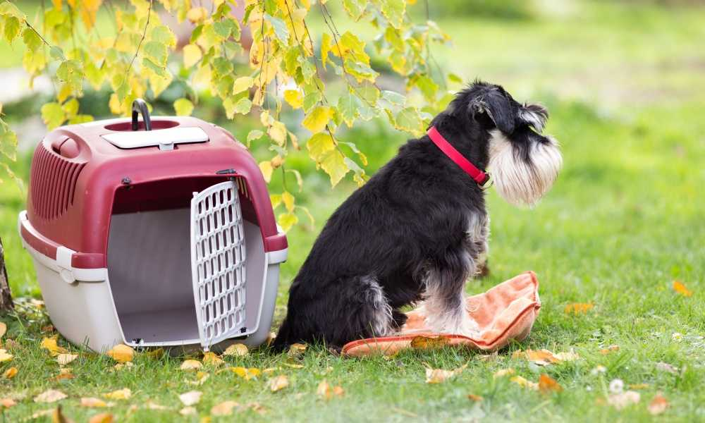 What are Dog Crates Used For?